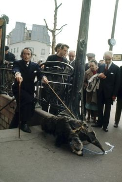 Dali Walking his Anteater