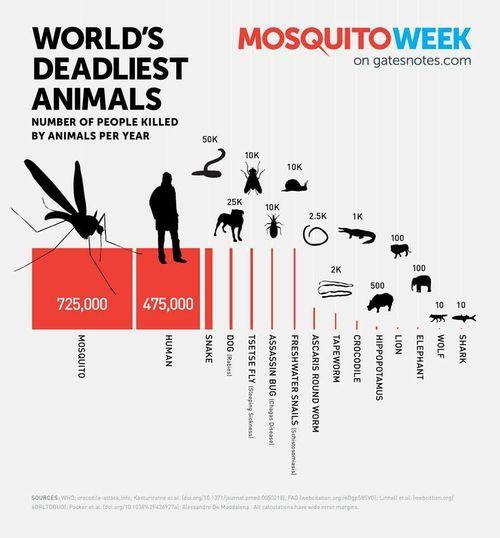 World's Deadliest Animal